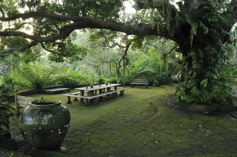 Copy of Copy of Healing Environment - Mango Tree